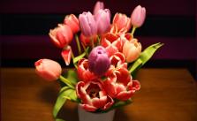 Mehr Frühling in dem Raum