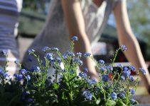 Gartenarbeiten – Gartenkalender rund ums Jahr